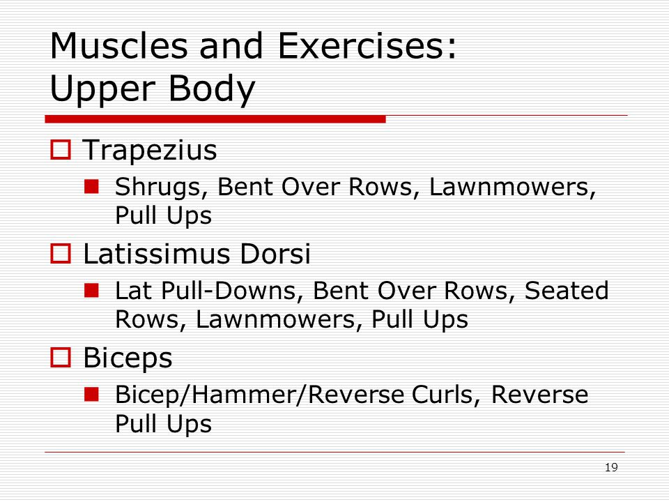 Muscles and Exercises: Upper Body