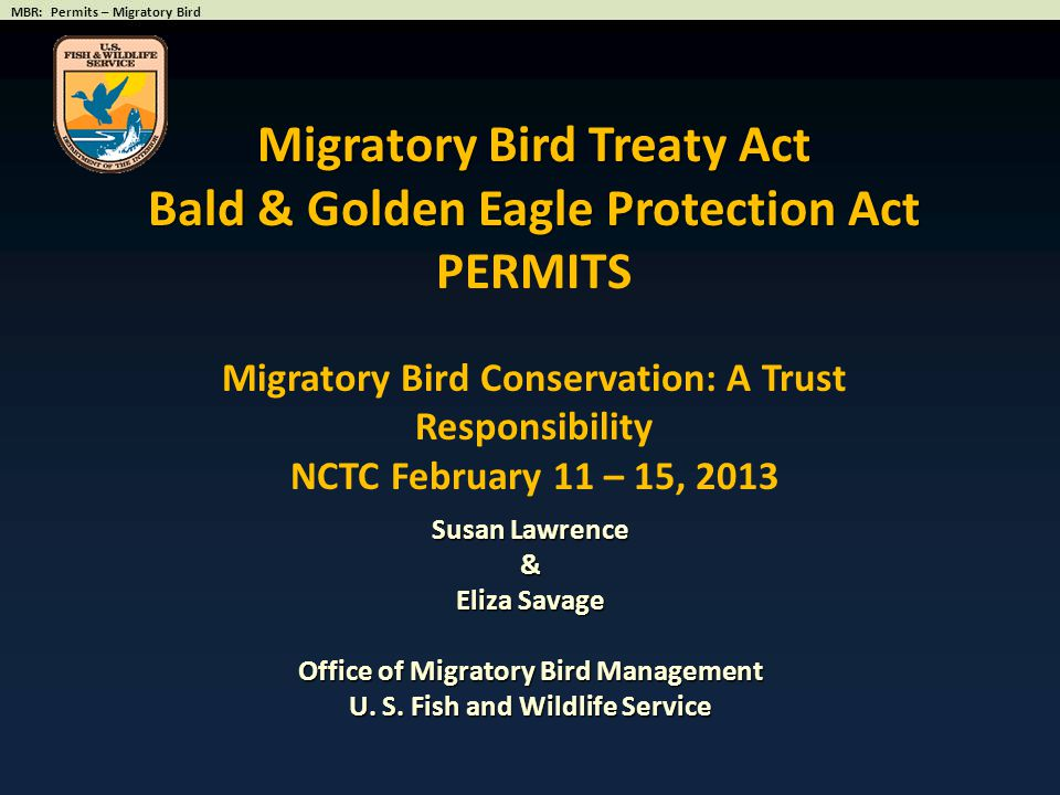 Migratory Bird Treaty Act Bald & Golden Eagle Protection Act PERMITS