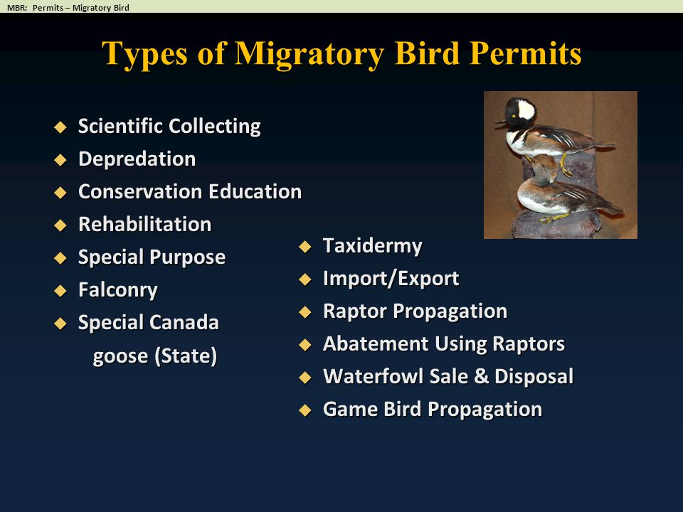 Types of Migratory Bird Permits