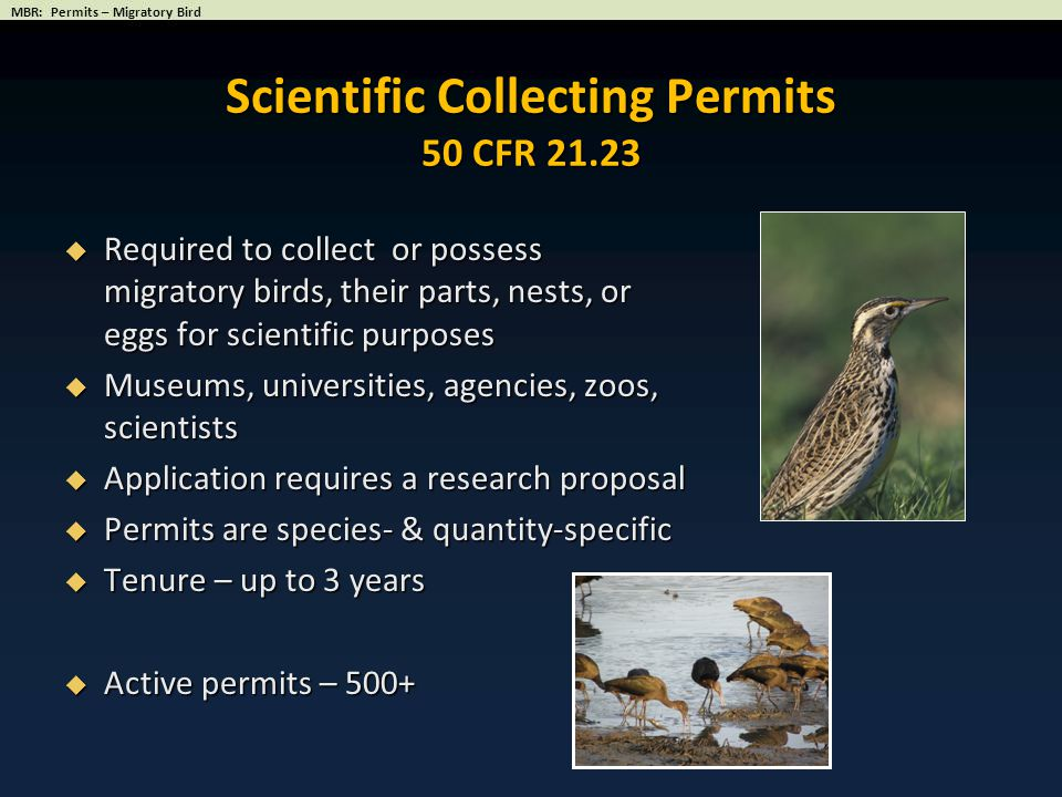 Scientific Collecting Permits 50 CFR 21.23