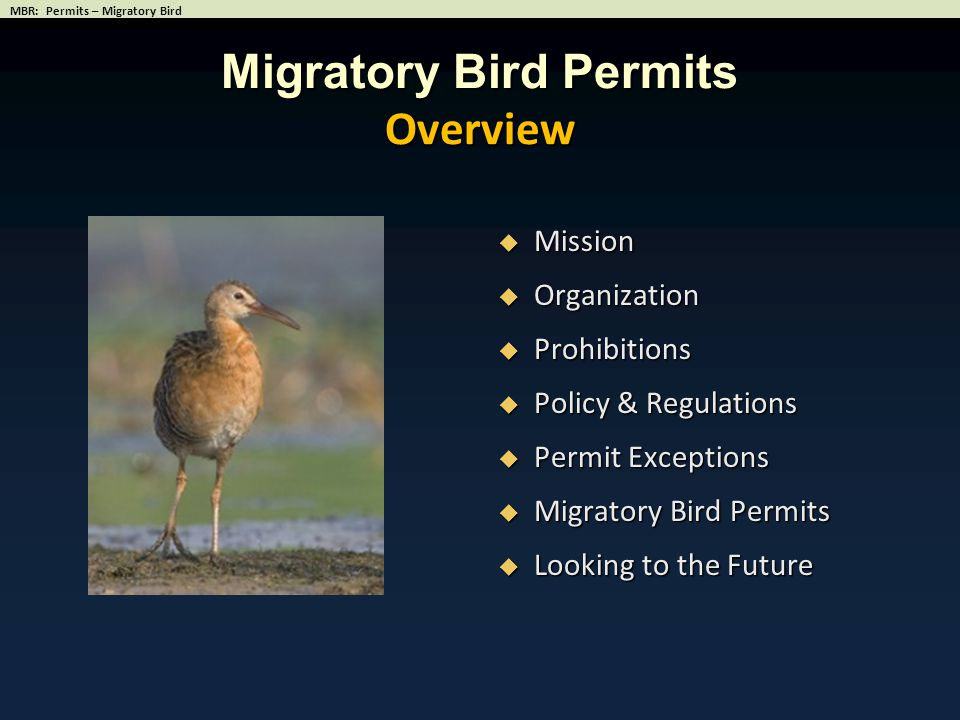 Migratory Bird Permits Overview