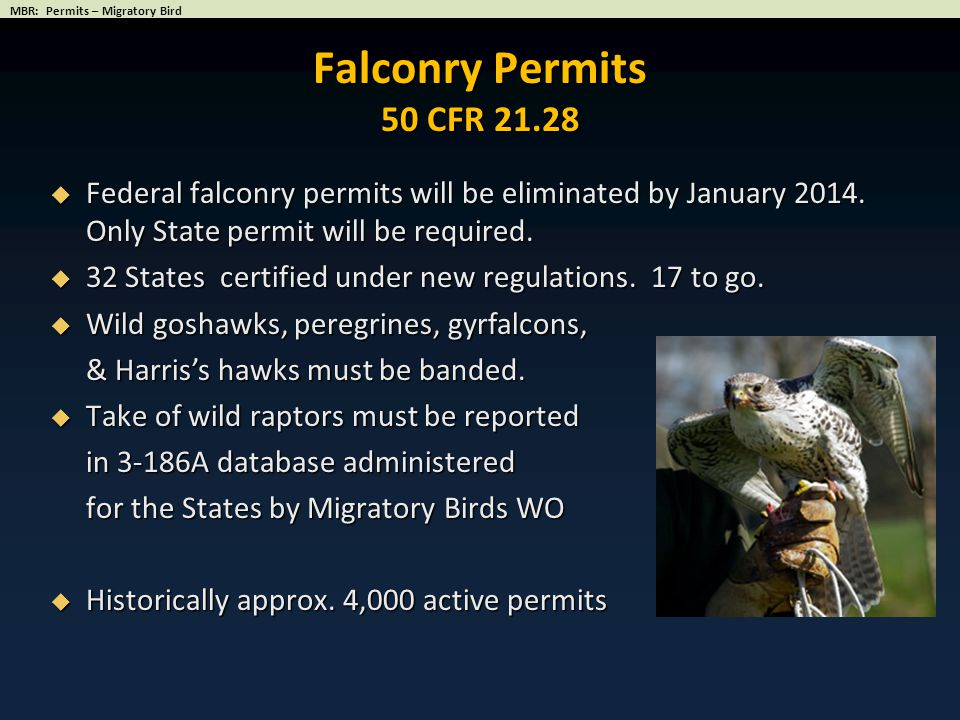 Falconry Permits 50 CFR 21.28 Federal falconry permits will be eliminated by January 2014. Only State permit will be required.