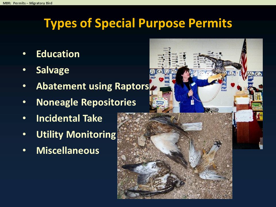 Types of Special Purpose Permits
