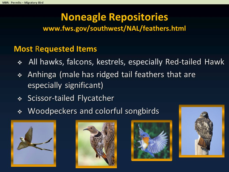 Noneagle Repositories www.fws.gov/southwest/NAL/feathers.html