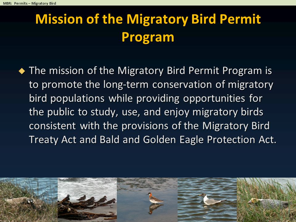 Mission of the Migratory Bird Permit Program