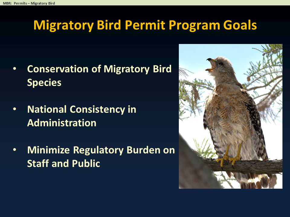 Migratory Bird Permit Program Goals