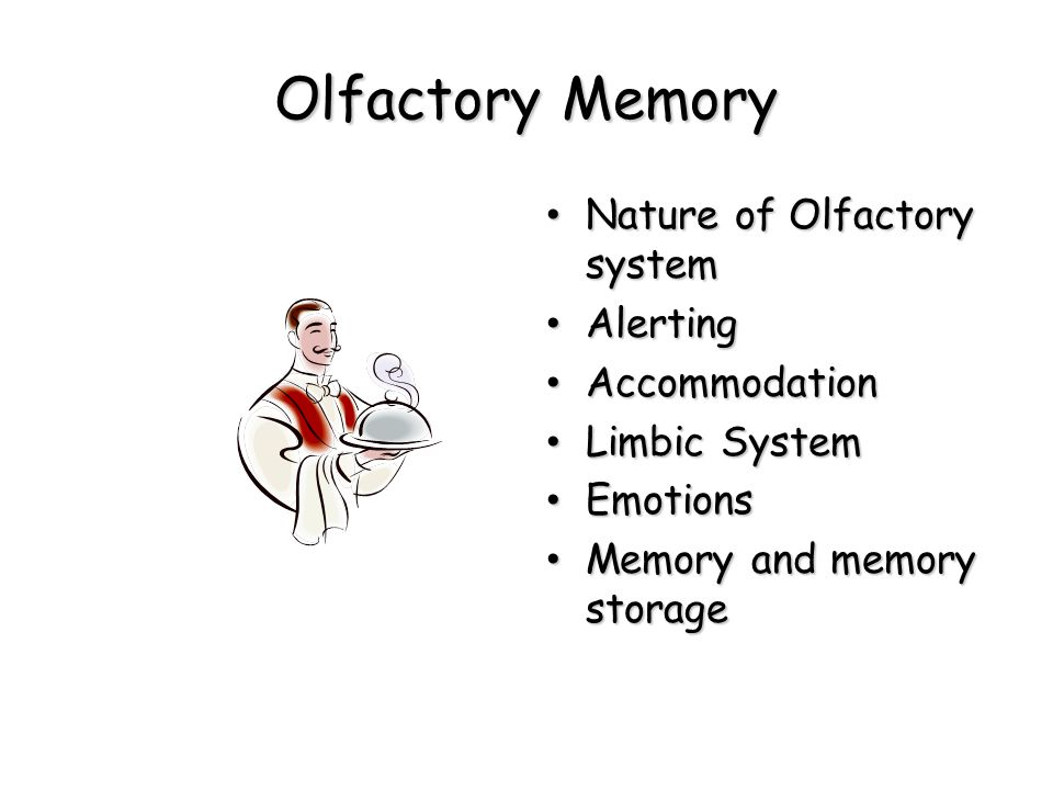 Olfactory Memory Nature of Olfactory system Alerting Accommodation