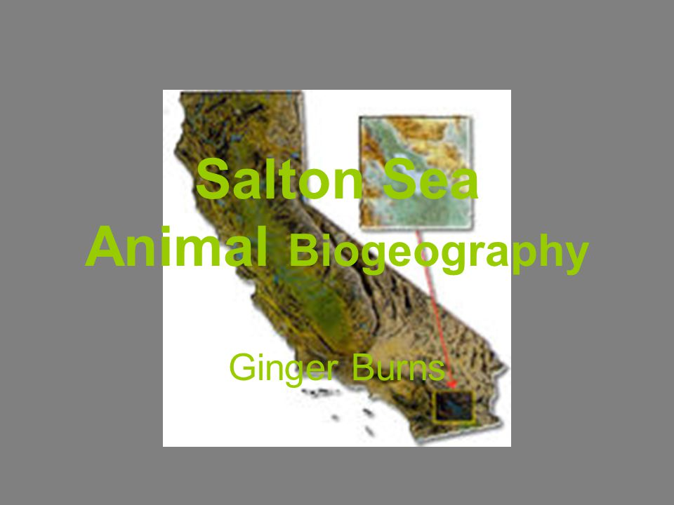 Salton Sea Animal Biogeography