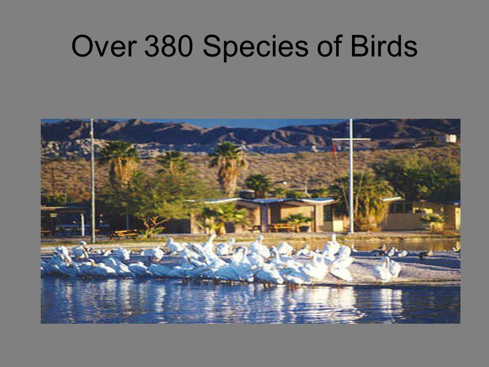 Over 380 Species of Birds