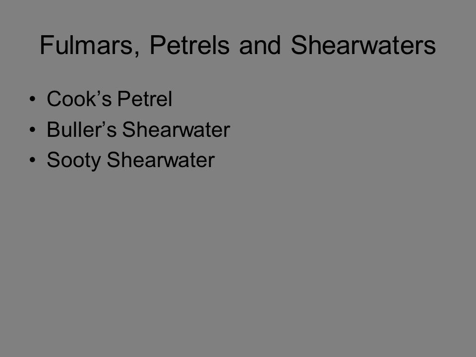 Fulmars, Petrels and Shearwaters