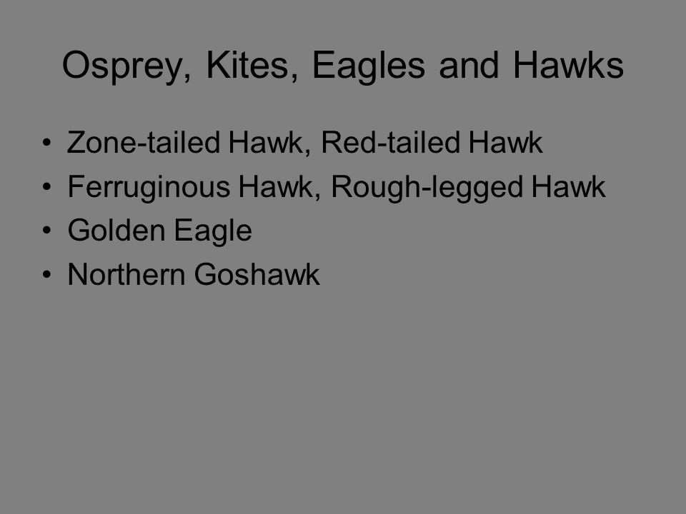 Osprey, Kites, Eagles and Hawks