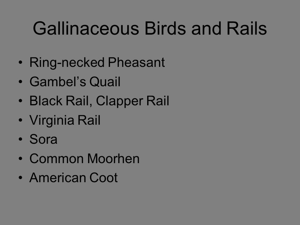 Gallinaceous Birds and Rails