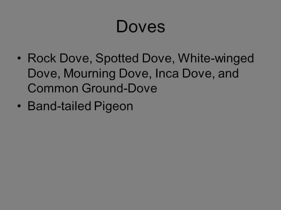 Doves Rock Dove, Spotted Dove, White-winged Dove, Mourning Dove, Inca Dove, and Common Ground-Dove.