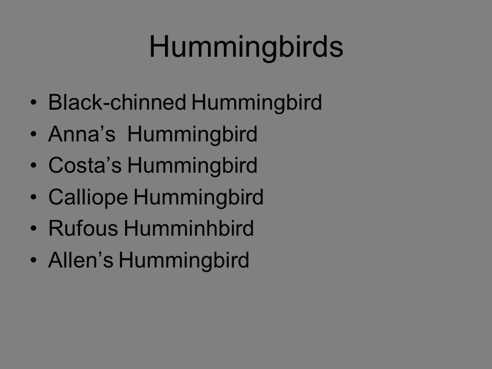 Hummingbirds Black-chinned Hummingbird Anna's Hummingbird