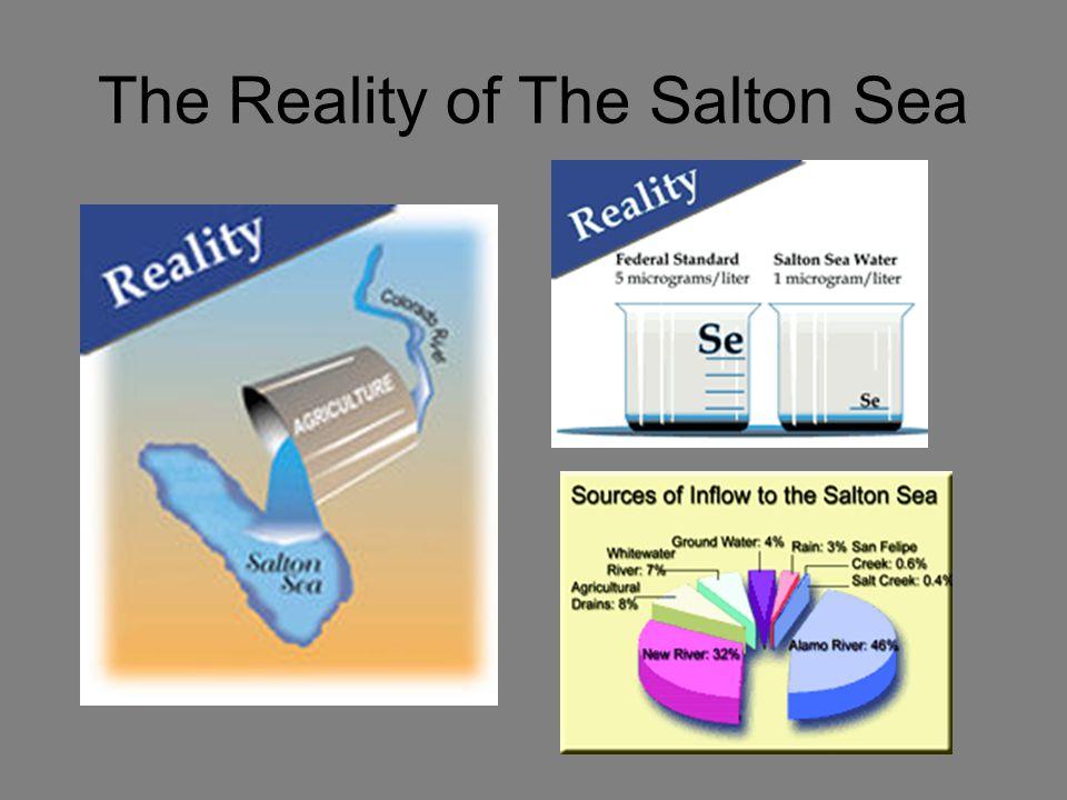 The Reality of The Salton Sea