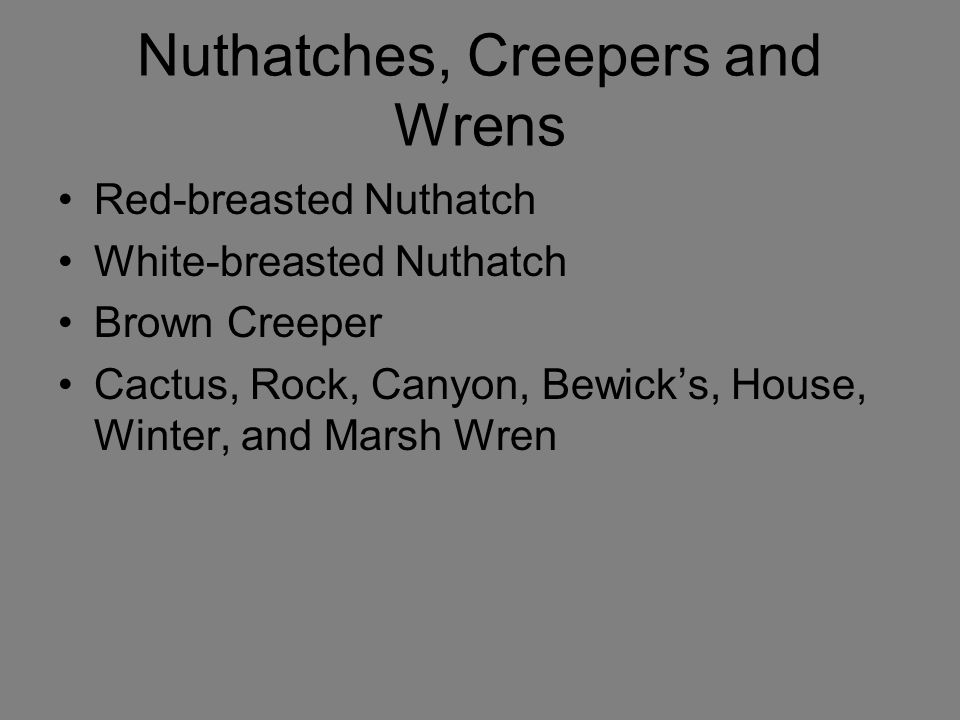 Nuthatches, Creepers and Wrens