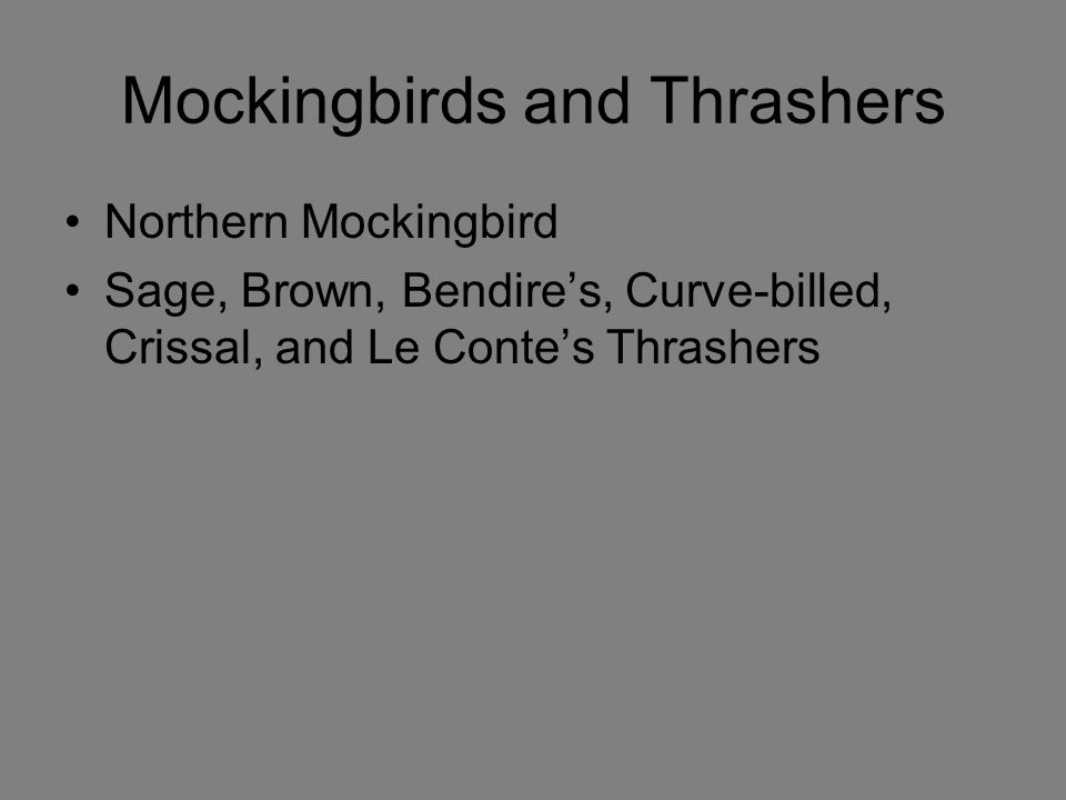 Mockingbirds and Thrashers