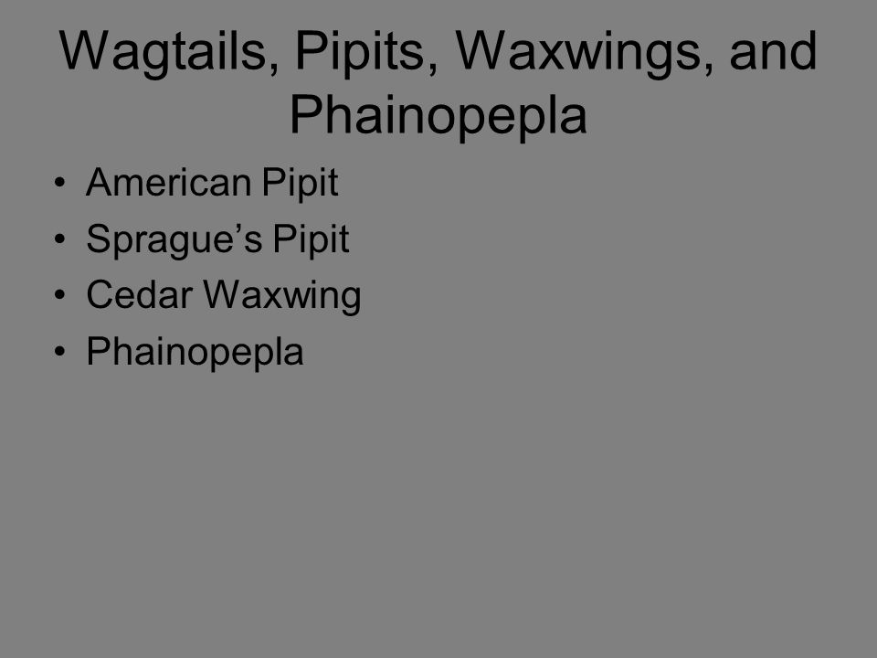 Wagtails, Pipits, Waxwings, and Phainopepla