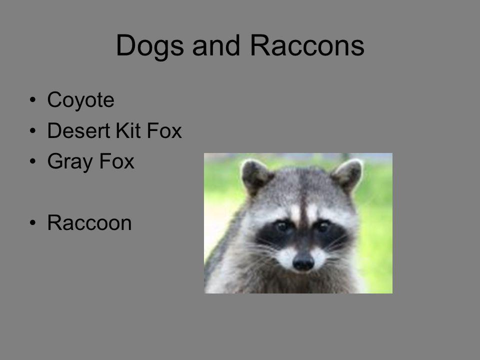 Dogs and Raccons Coyote Desert Kit Fox Gray Fox Raccoon