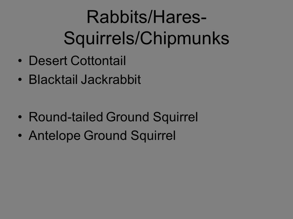 Rabbits/Hares-Squirrels/Chipmunks