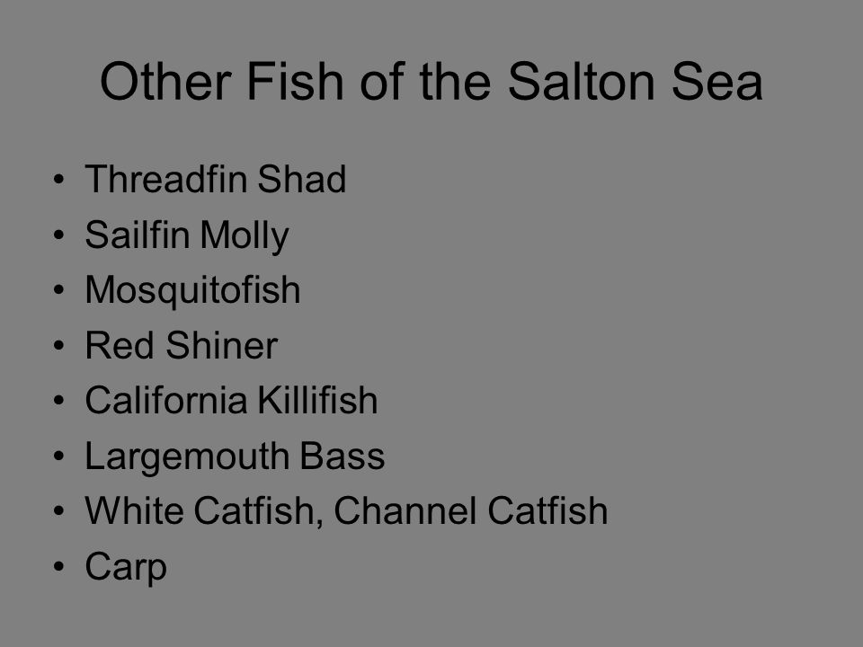 Other Fish of the Salton Sea