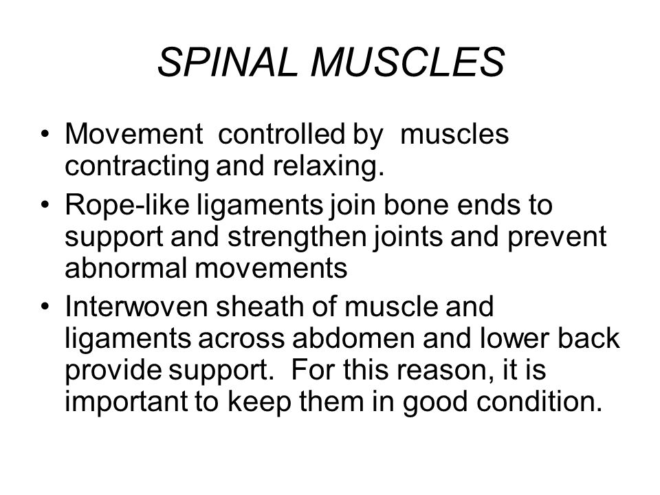 SPINAL MUSCLES Movement controlled by muscles contracting and relaxing.