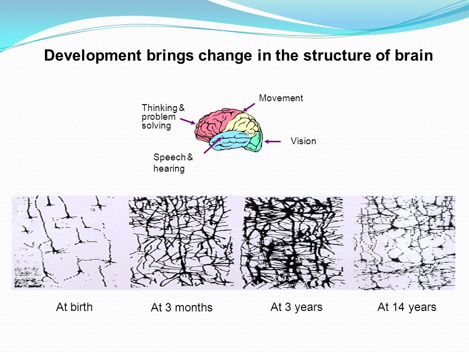 Development brings change in the structure of brain