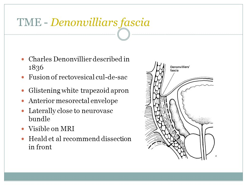 TME - Denonvilliars fascia