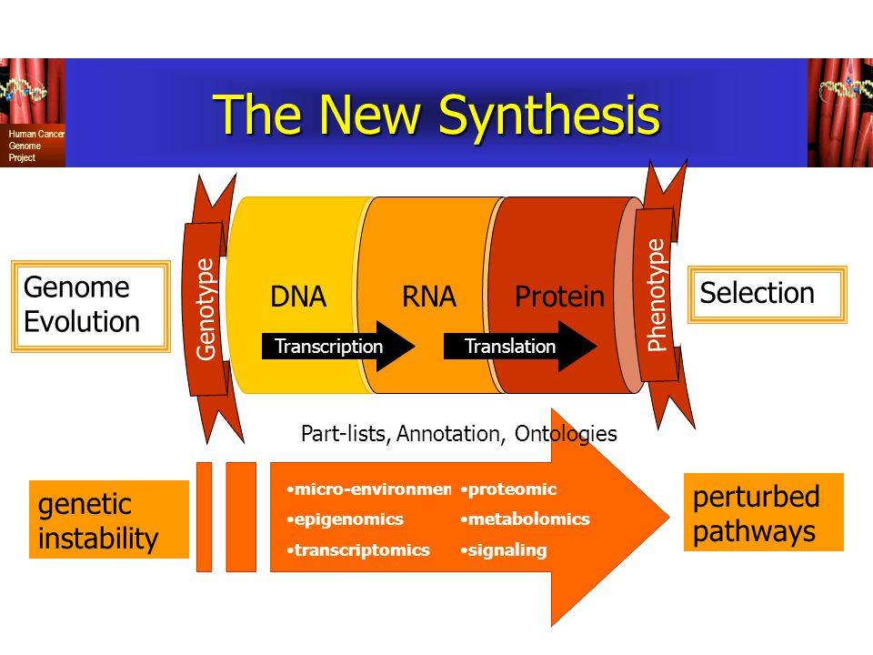 The New Synthesis DNA RNA Protein Genome Evolution Selection