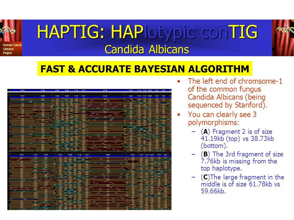 HAPTIG: HAPlotypic conTIG Candida Albicans