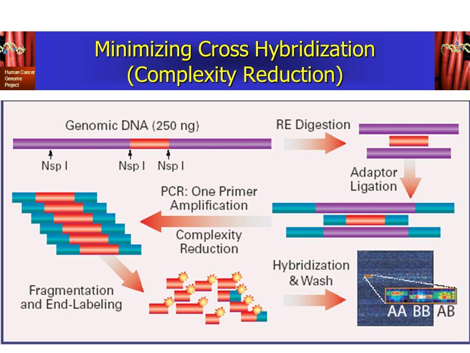 Minimizing Cross Hybridization (Complexity Reduction)