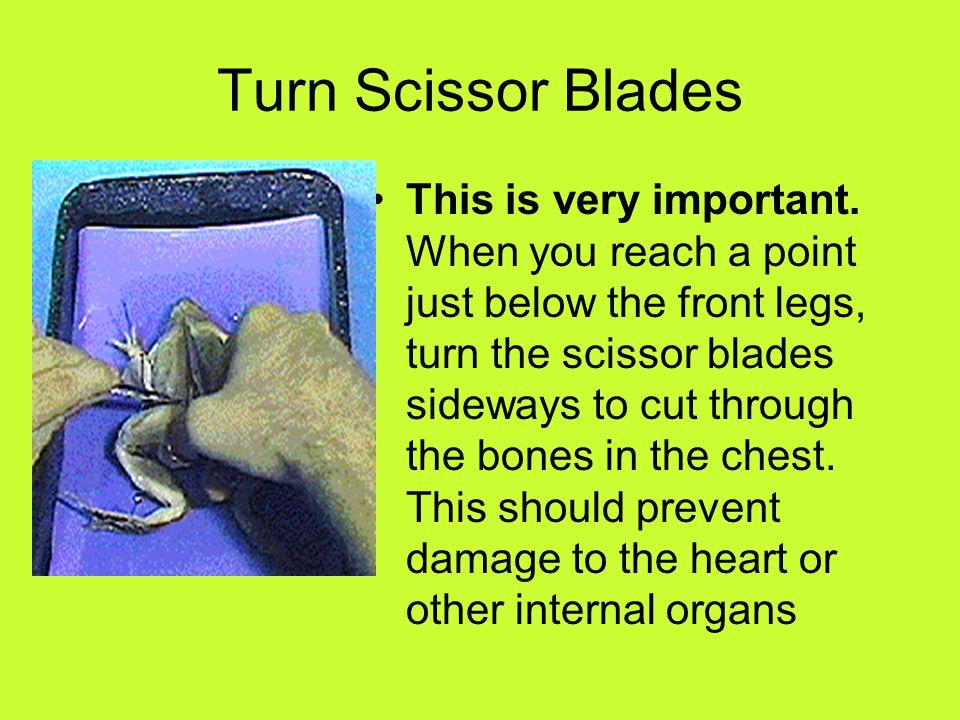 Turn Scissor Blades