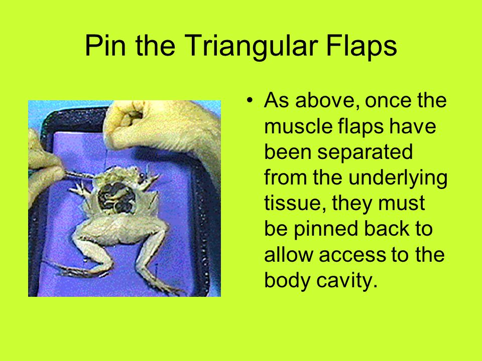 Pin the Triangular Flaps