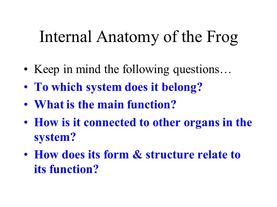 Internal Anatomy of the Frog