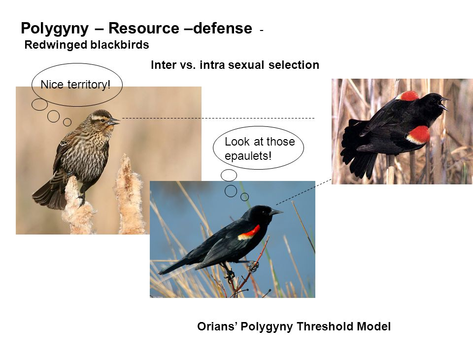 Polygyny – Resource –defense -