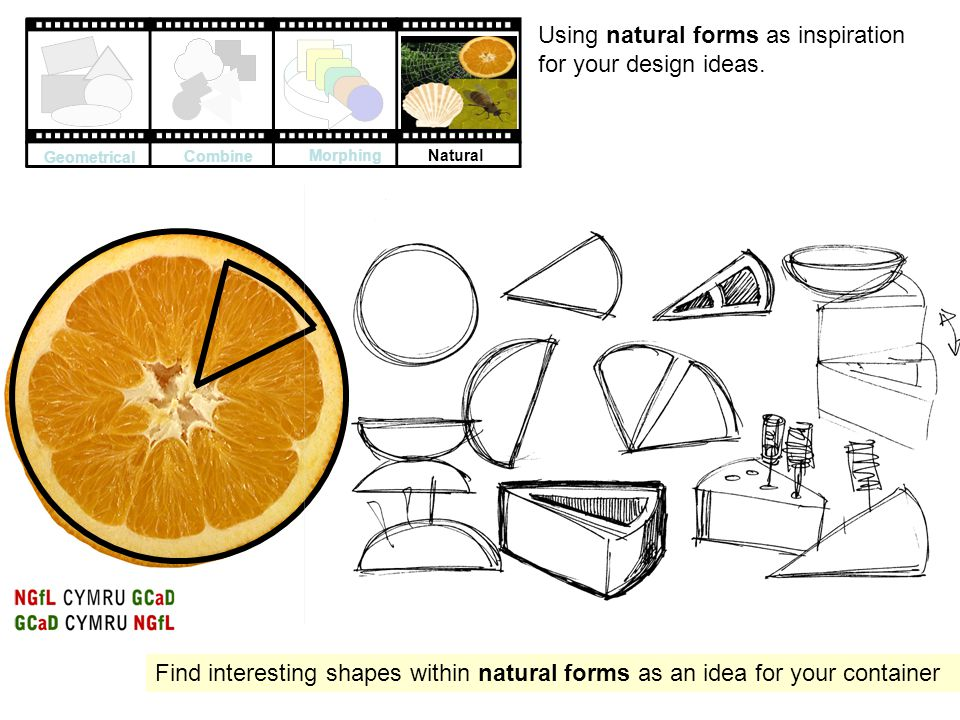 Using natural forms as inspiration for your design ideas.