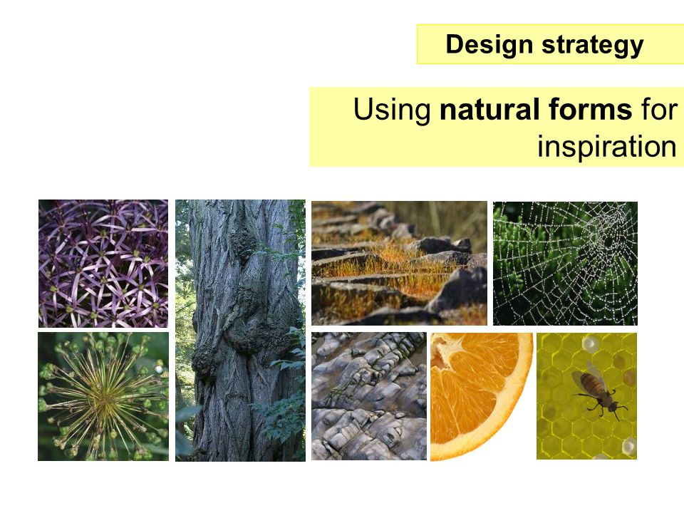 Using natural forms for inspiration