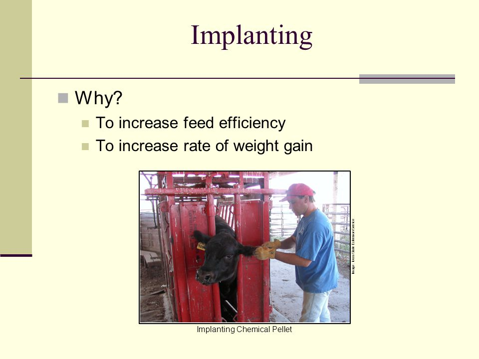 Implanting Why To increase feed efficiency