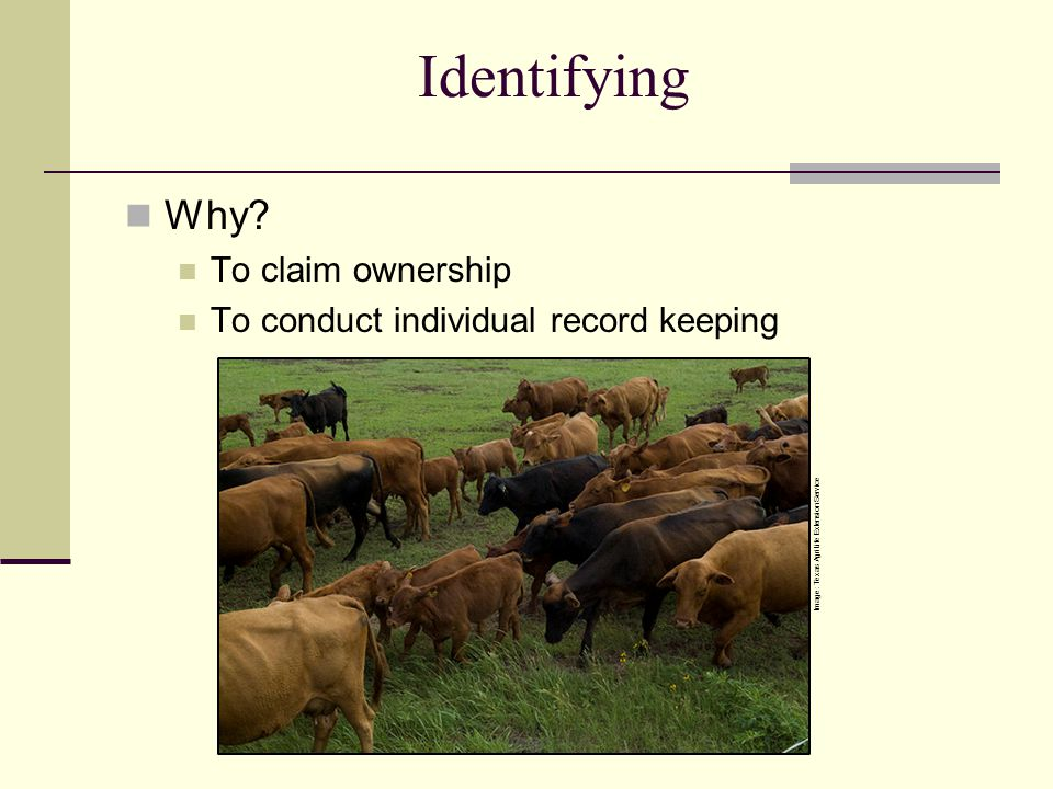 Identifying Why To claim ownership