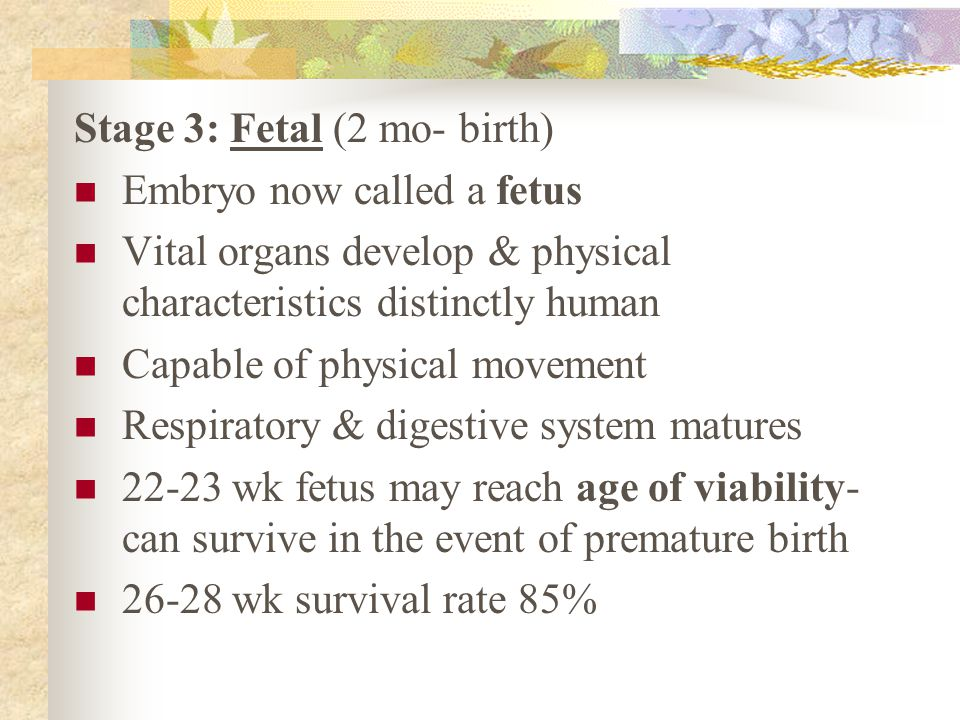 Stage 3: Fetal (2 mo- birth)