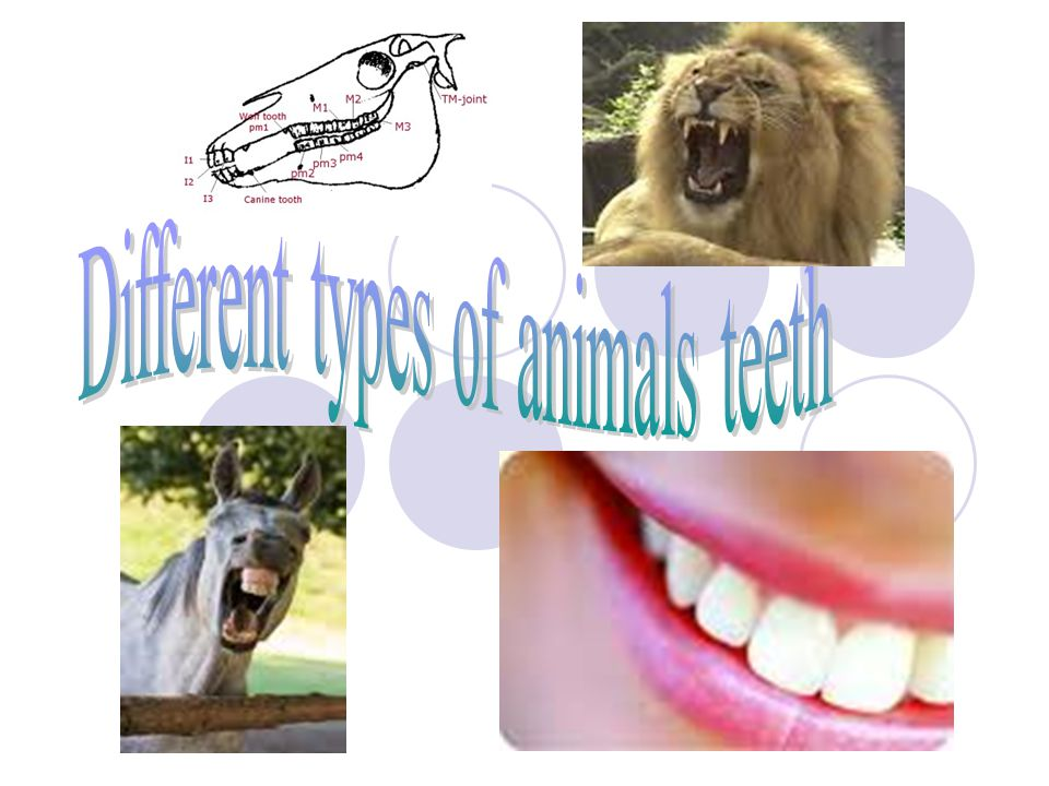 Different types of animals teeth