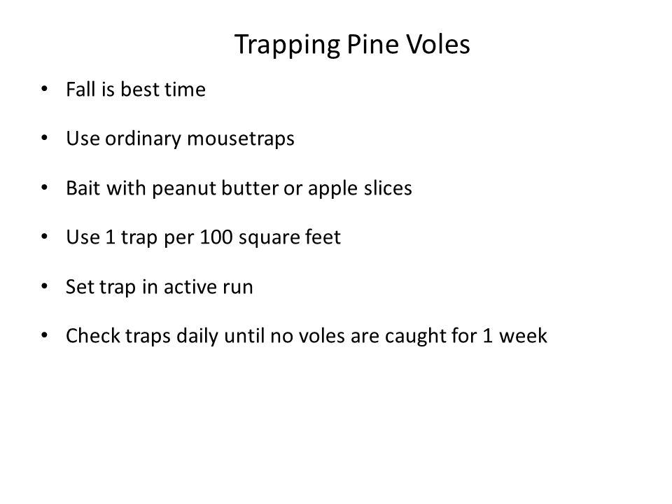 Trapping Pine Voles Fall is best time Use ordinary mousetraps