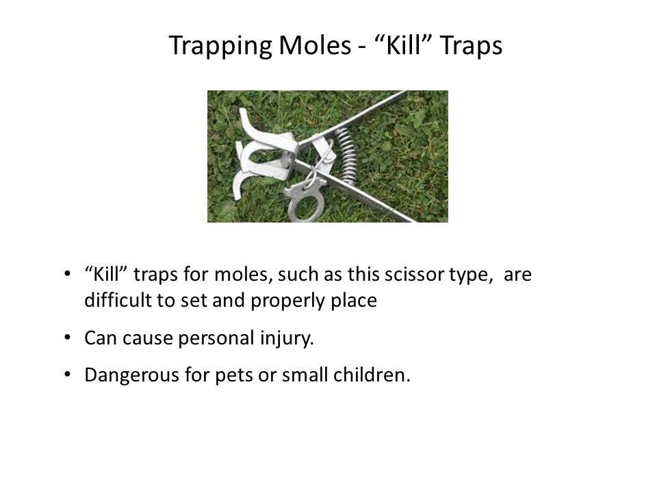 Trapping Moles - Kill Traps
