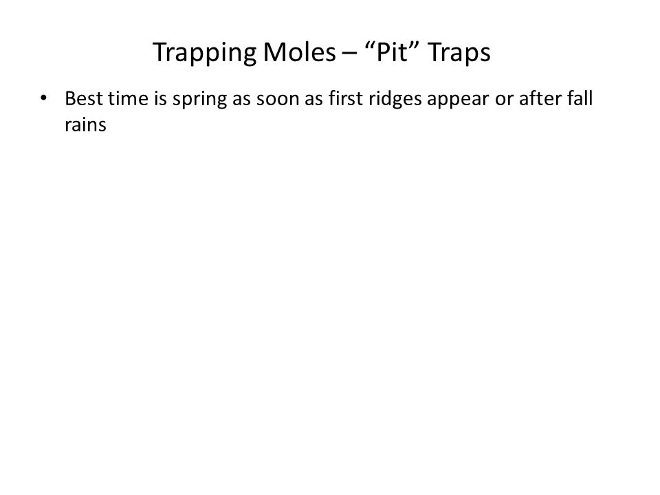 Trapping Moles – Pit Traps
