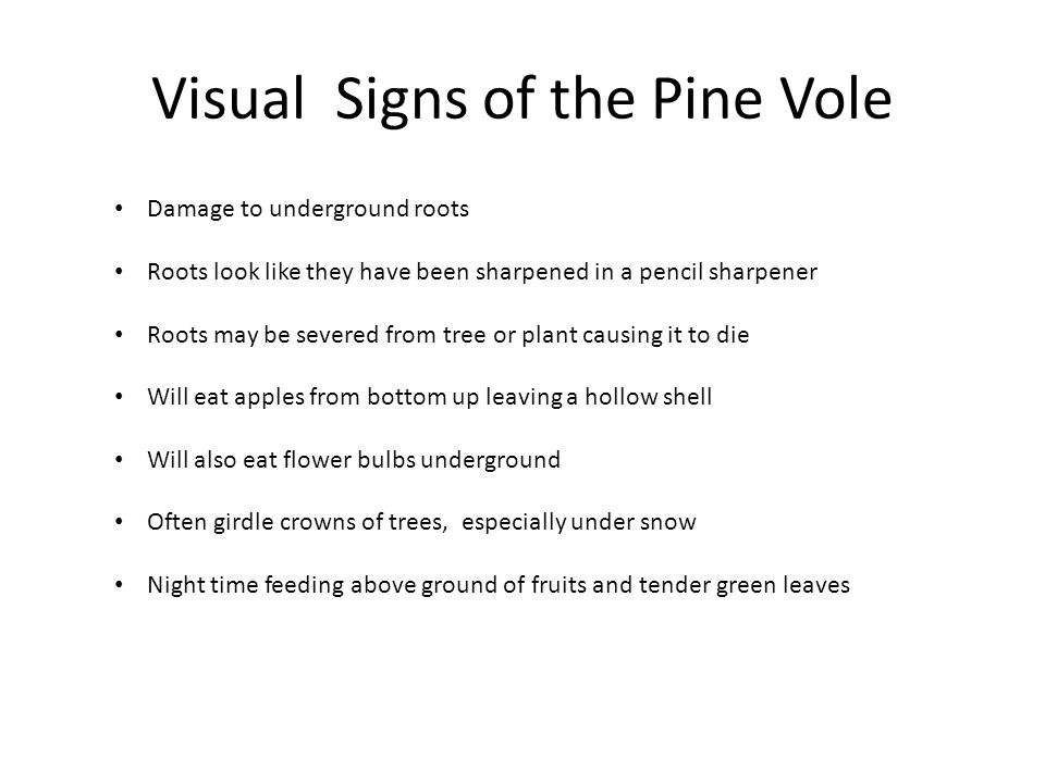 Visual Signs of the Pine Vole