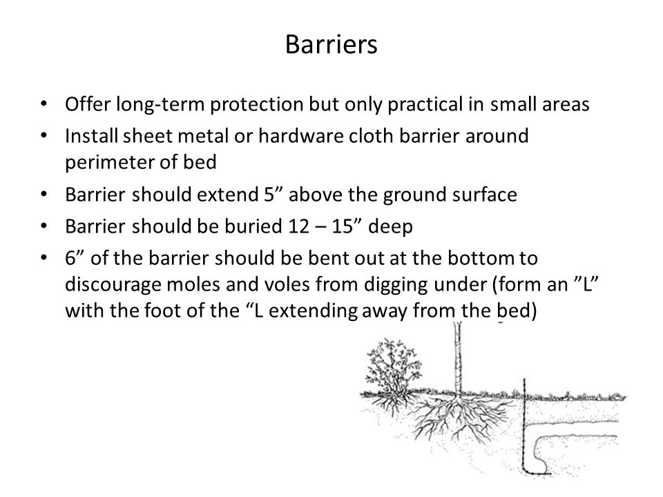 Barriers Offer long-term protection but only practical in small areas