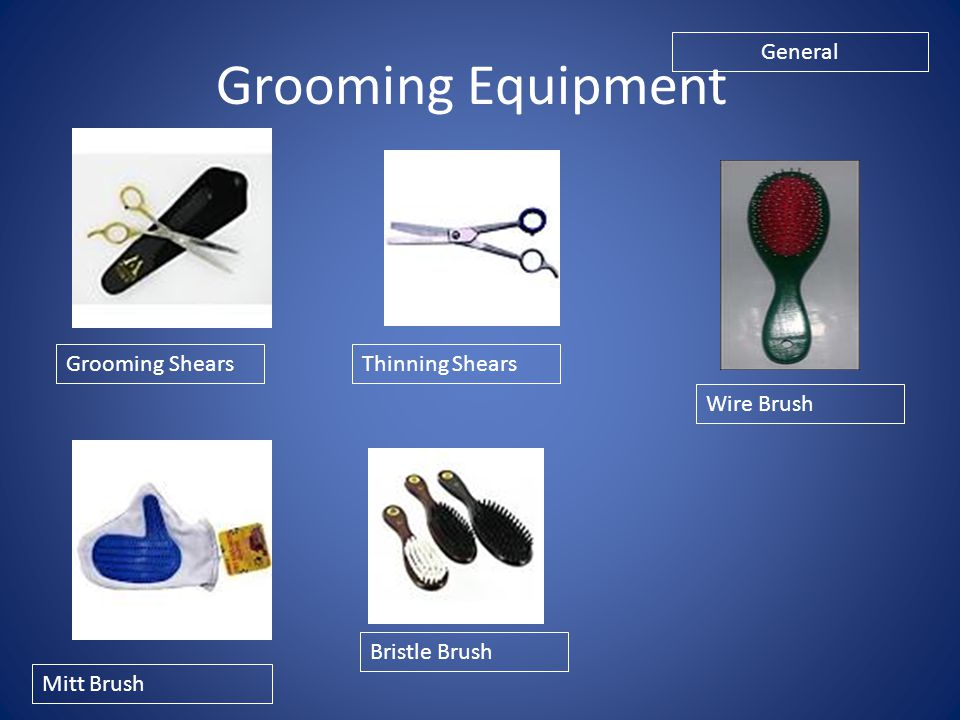 Grooming Equipment General Grooming Shears Thinning Shears Wire Brush