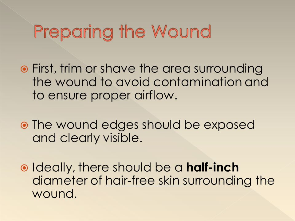 Preparing the Wound First, trim or shave the area surrounding the wound to avoid contamination and to ensure proper airflow.
