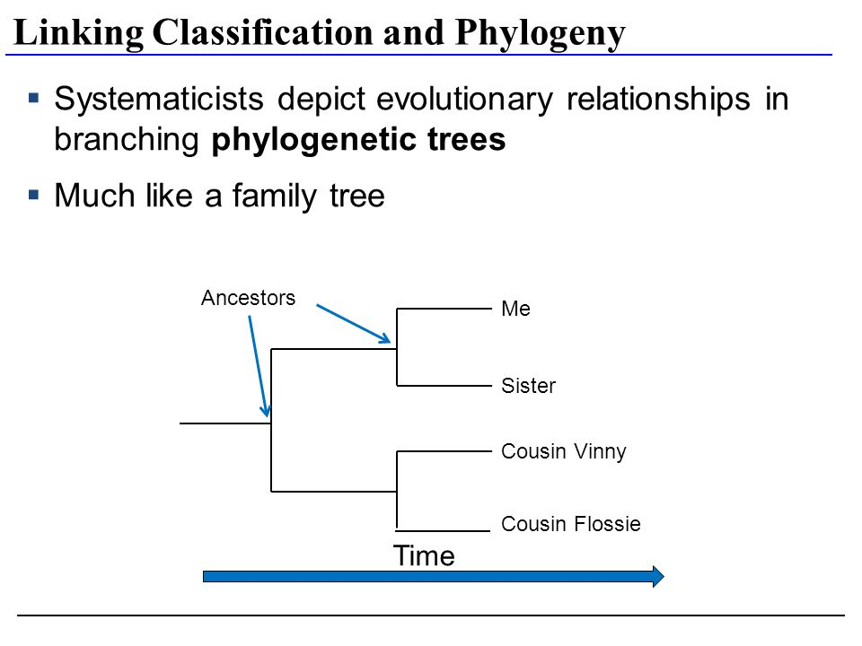 phylogenetics and dating