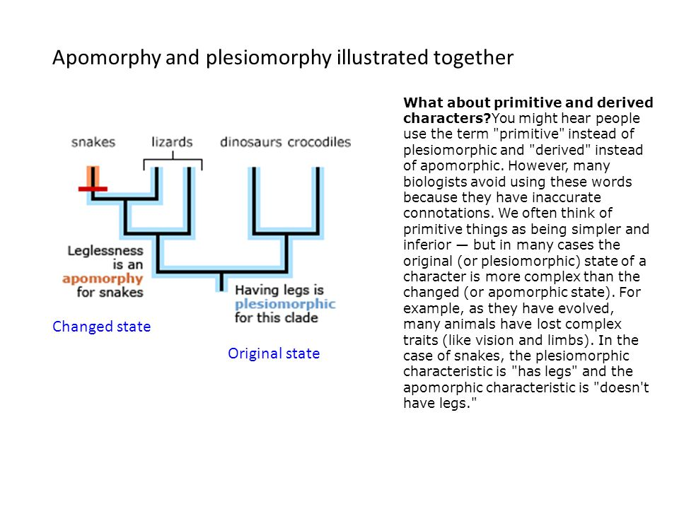 Apomorphy and plesiomorphy illustrated together